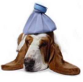 dog-illness-symptoms